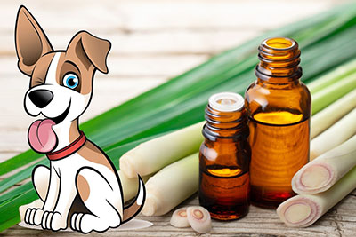 is lemongrass essential oil safe for dogs